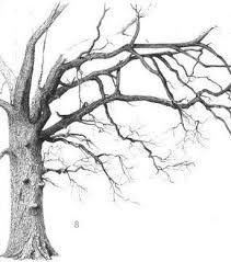 the 25 best oak tree drawings ideas on pinterest branch drawing