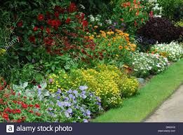 english country garden with assorted flowers in bed by pathway