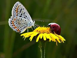 360 best beautiful butterflies ladybugs images on