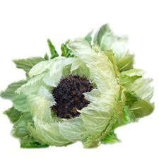 Lotus Flower Tea - snow lotus tea chinese 100 natural beauty anti aging enhance