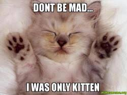 Dont Be Mad Meme - dont be mad i was only kitten just kitten make a meme