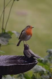 684 best bird watching images on pinterest animals beautiful
