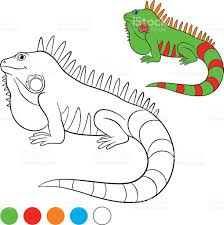 coloring pages cute iguana sits on the rock stock vector art