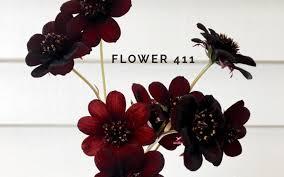 november flowers mayesh wholesale florist november flowers