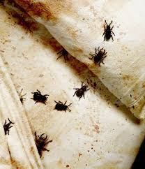Can Bleach Kill Bed Bugs How To Treat Bed Bugs Image Titled Treat Bed Bug Bites Step 2