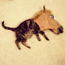 Horse Head Meme - irti funny picture 3897 tags cat horse head mask horse kitten