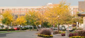 resume u0026 cover letter university of dayton ohio