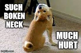 Meme Shiba Inu - when my shiba inu does weird things all i see are memes