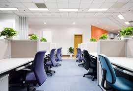 office plant best office plants archives plant interscapes indoor office plants