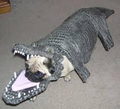 Funny Dog Costumes Halloween 112 Dog Costumes Images Animal Costumes Dog