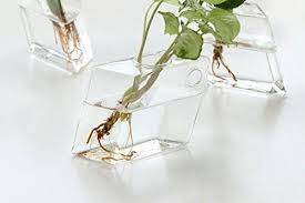 Wall Mounted Glass Flower Vases 2 Pcs Wall Mounted Glass Vase Wall Hanging Planter