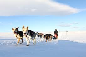 dog sledding in norway book husky adventures fjord tours