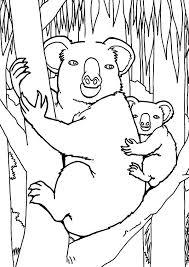 koala bear jungle coloring koala bear jungle
