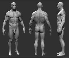 Female Anatomy Reference 32 Best Other Images On Pinterest Anatomy Reference Drawing And