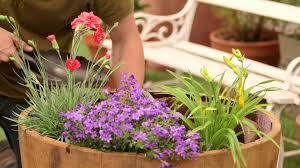 plante vivace soleil comment planter et entretenir des plantes vivaces pour balcon et