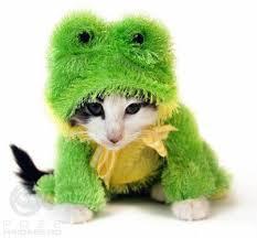 Cat Halloween Costumes Cats Halloween Costume Cat Frogs Pet Costumes
