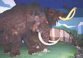 woolly mammoth gene study extinction theory u2014 eberly