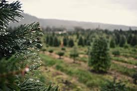 oh christmas tree where we went this year u2013 northwest healthy mama