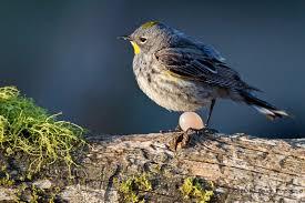 bird photography u2013 dream catcher images by bruce finocchio