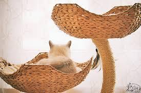 designer kratzb ume designer kratzbaum für katzen atelier zauberlandcats