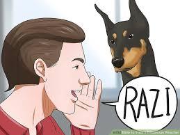 belgian shepherd how to train 3 ways to train a doberman pinscher wikihow