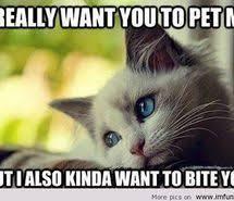 Valentine Memes Funny - valentines day funny memes images on favim com