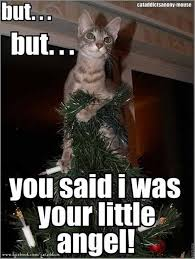 Christmas Cat Memes - but but you said i was your little angel catoftheday cat