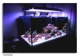 Live Rock Aquascaping Ideas Aquascape Ideas U2013 Home And Furnitures