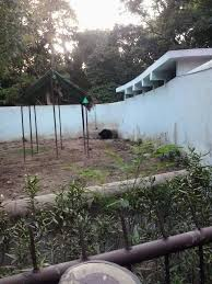 file bear in patna zoo jpg wikimedia commons
