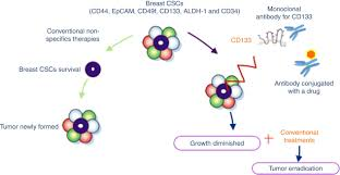 cd133 in breast cancer cells and in breast cancer stem cells as
