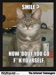 Rude Funny Memes - funny rude cat meme pmslweb