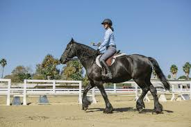 home traditional equitation
