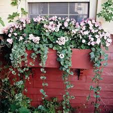 blumen fã r balkon 36 besten balkon bilder auf gardening balkon und