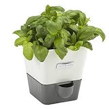 Self Watering Indoor Planters | amazon com cole mason self watering indoor herb garden planter