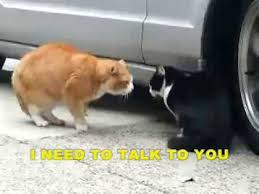 Cat Fight Meme - funny cats fighting with subtitles youtube
