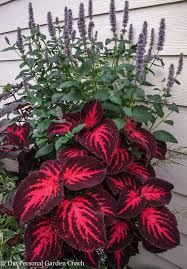 no sun plants 40 best plants no sunlight needed images on pinterest gardening