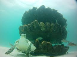 swara places artificial reef off grayton beach