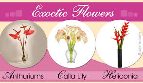 Exotic Colors by List Of Different Types Of Exotic Flowers With Exquisite Visuals