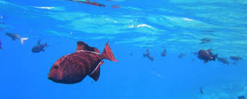 certification requirements for ornamental imports fish health unit