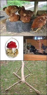 1084 best raising chickens in your back yard images on pinterest