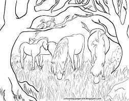 dartmoor ponies wildlife colouring page colouring page art