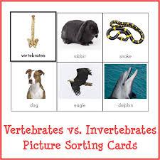 free printable worksheets vertebrates invertebrates vertebrates vs invertebrates picture sorting cards gift of curiosity