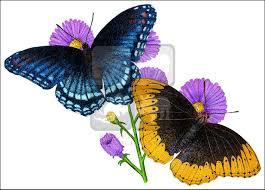 diana fritillary butterflies speyeria diana line and
