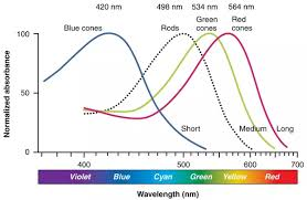 eyes sensitive to light at night how do the cones in our eyes detect specific wavelengths of light