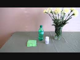 Wholesale Carnations Wholesale Carnations Flower Care Youtube
