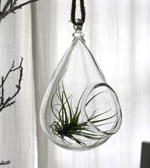 blown glass plant globe hanging terrarium