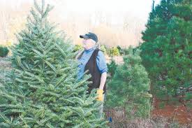 christmas tree farm is a delight west milford hewitt