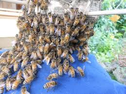 keeping bees in straw hives an new journey keeping backyard bees