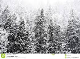 winter snow falling on san national forest stock photo