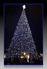 how many christmas lights per foot of tree it s the 100 ft christmas tree lighting ceremony in del